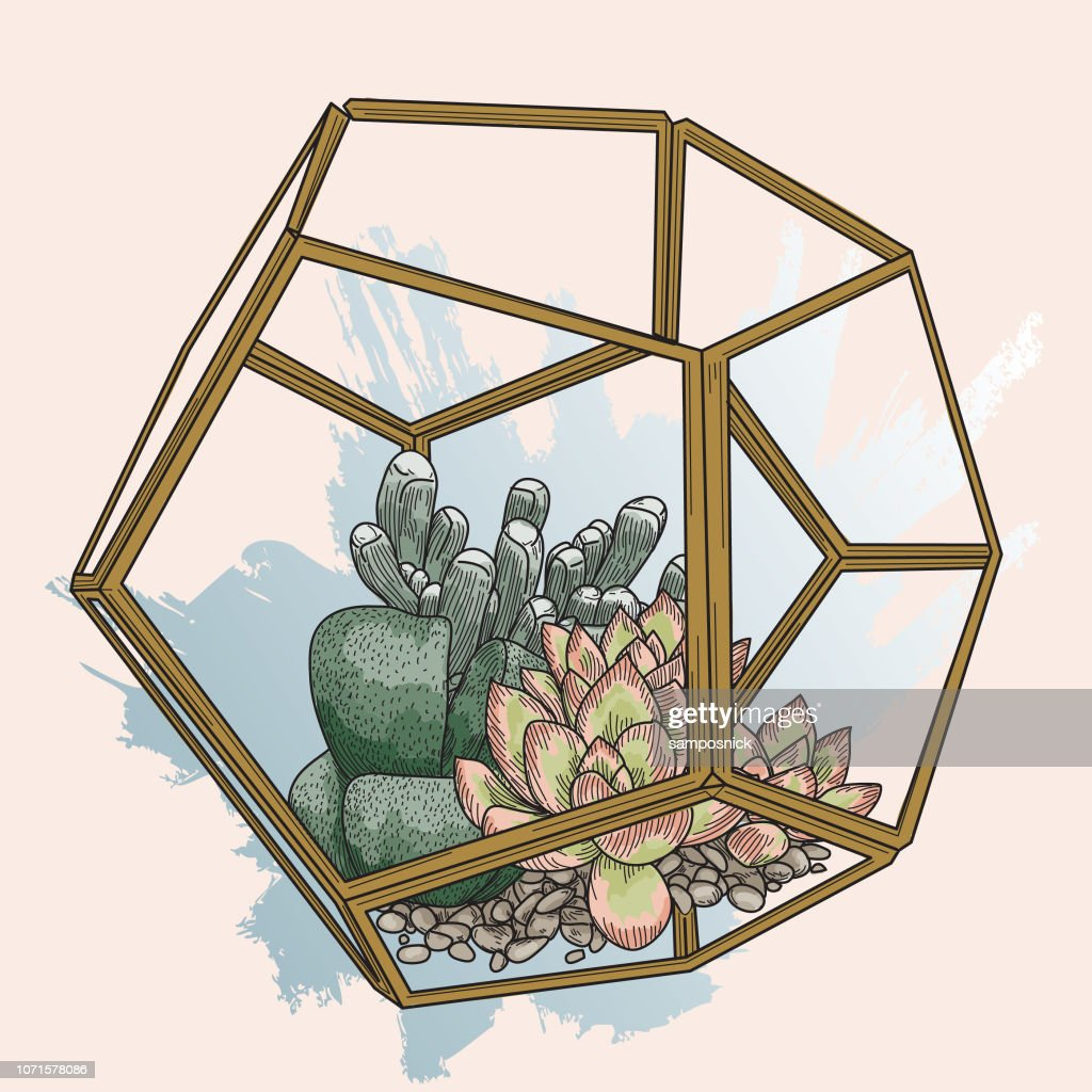 Succulent Plants In Glass Terrarium High Res Vector Graphic Getty Images