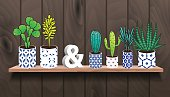 Succulents and cactus plants in pots