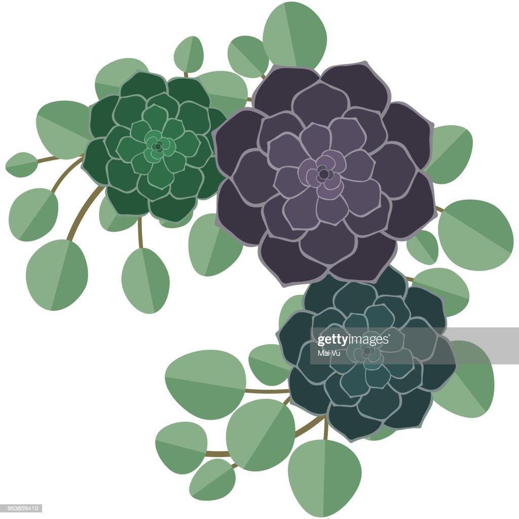 Succulents and Eucalyptus Illustration