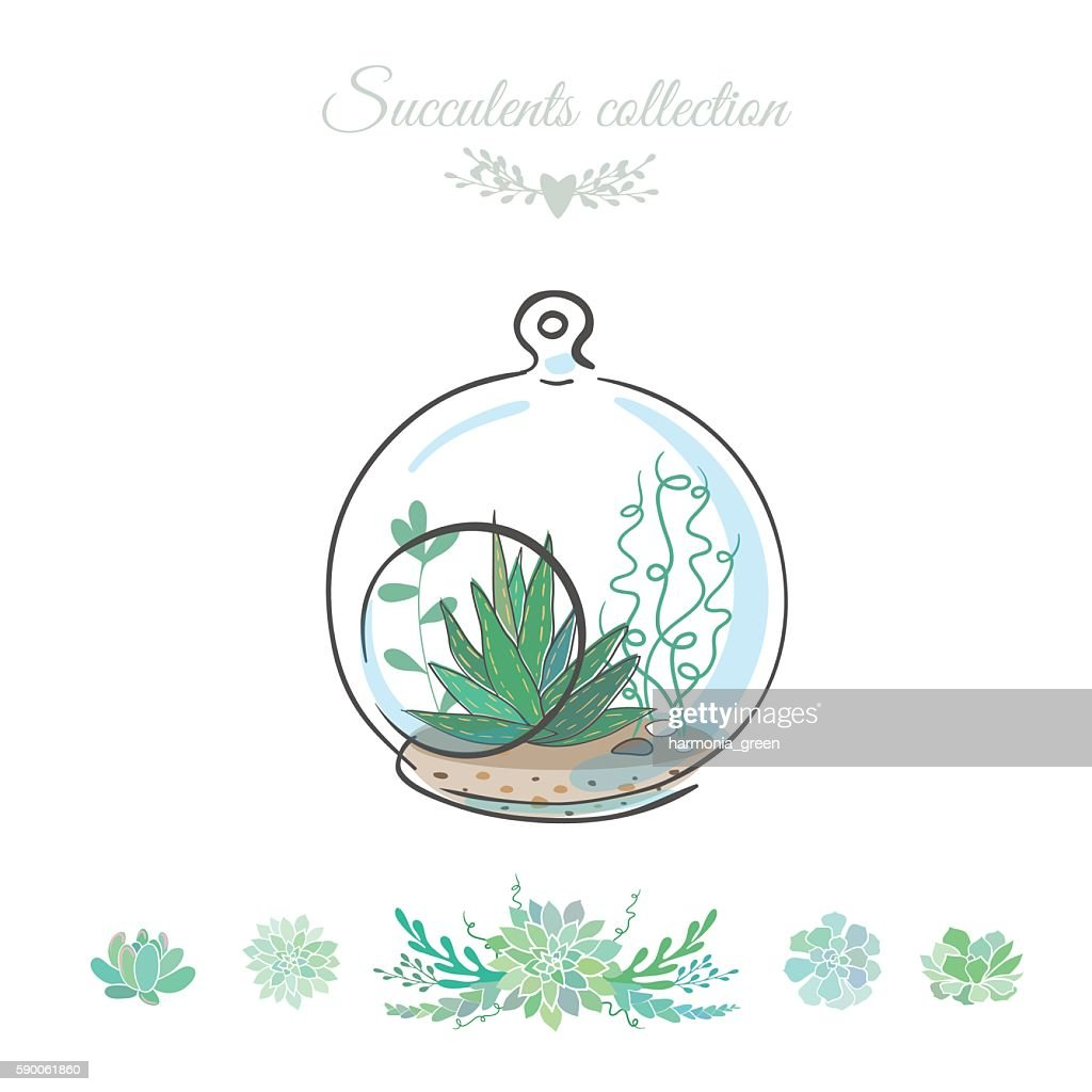 succulents in round glass bowl