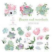 Succulents, protea, rose, anemone, echeveria, hydrangea big vector collection