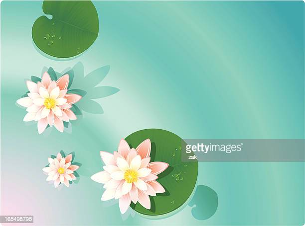 summer background - lily stock illustrations, clip art, cartoons, & icons