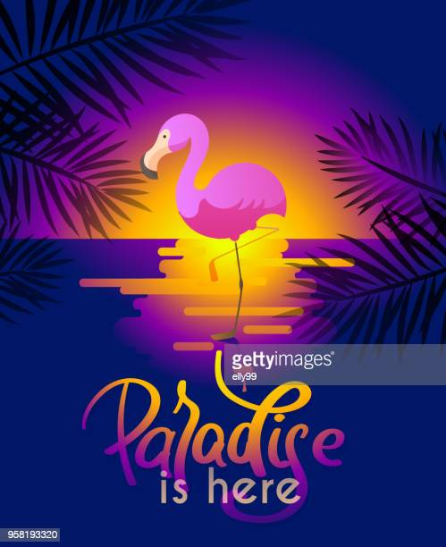 summer background with flamingo for your design - non western script stock illustrations