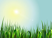 Summer background with green grass.