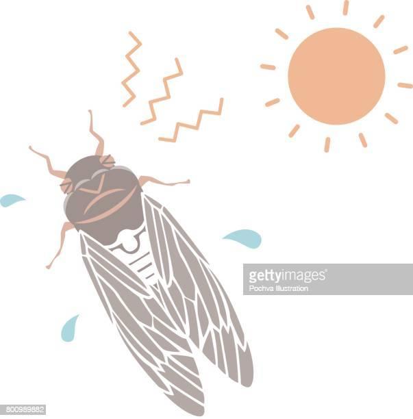 illustrations, cliparts, dessins animés et icônes de cigale de l'été - cigale