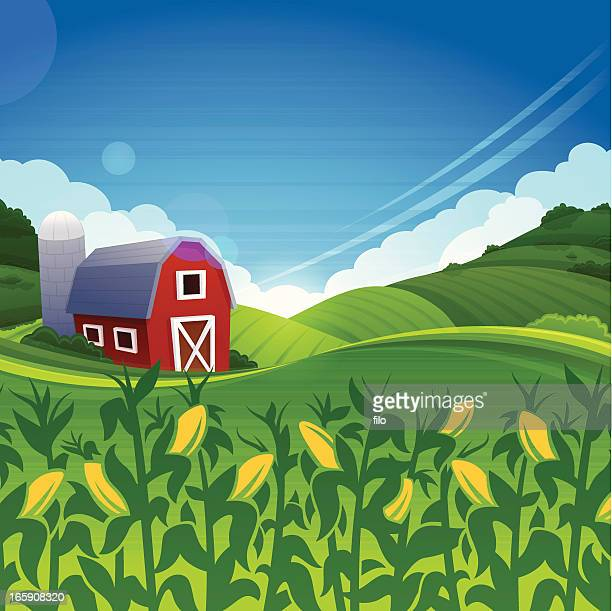 summer farm - corn stock illustrations, clip art, cartoons, & icons