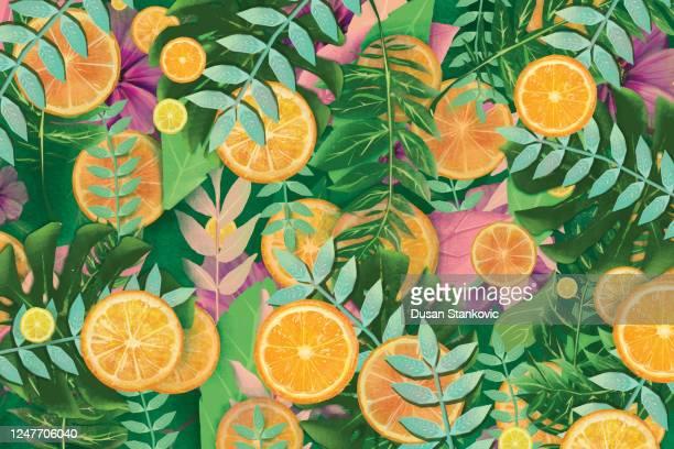 summer fruit background. oranges and lemons - tropical fruit stock illustrations