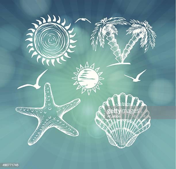 ilustraciones, imágenes clip art, dibujos animados e iconos de stock de verano, iconos dibujados a mano - estrella de mar