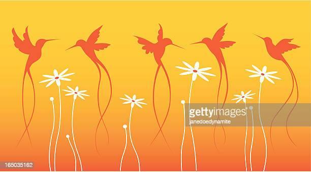 Summer hummingbirds