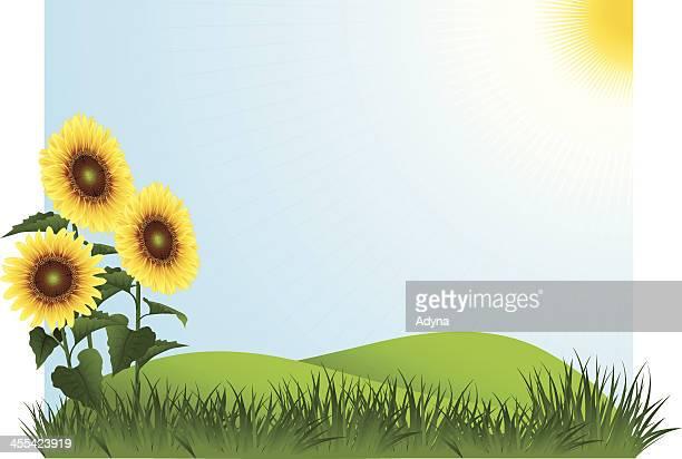 ilustraciones, imágenes clip art, dibujos animados e iconos de stock de paisaje de verano - girasol