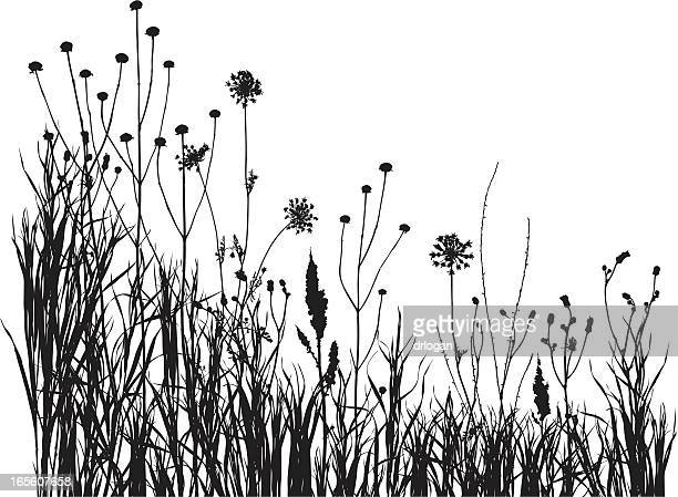 summer meadow 1 - prairie stock illustrations, clip art, cartoons, & icons