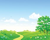 Summer meadow and sky background