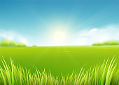 Summer meadow field. Nature background with sun, sunny rays, grass landscape