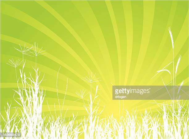 summer meadow - prairie stock illustrations, clip art, cartoons, & icons