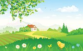 Summer rural garden