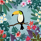 Summer tropical background. Toucan bird with palm and monstera leaves, hibiscus and plumeria flowers. Stock vector illustrations, flat design