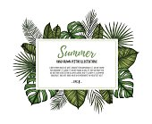 Summer tropical exotic template. Label with palm leaves (monstera, areca palm, fan palm, banana leaves). Hand drawn vector illustration. Perfect for prints, posters, invitations, packing etc