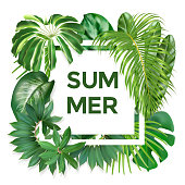 Summer typography with exotic leaves