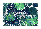 Summer vector tropical postcard design with green monstera palm leaves