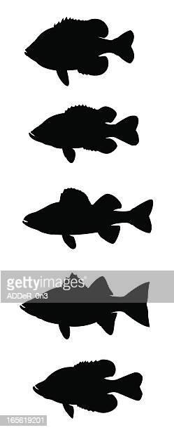 ilustraciones, imágenes clip art, dibujos animados e iconos de stock de sol de pescado - pez luna pez