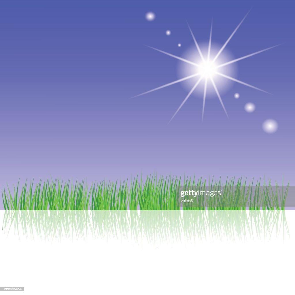 Sun Rays and Fresh Green Grass