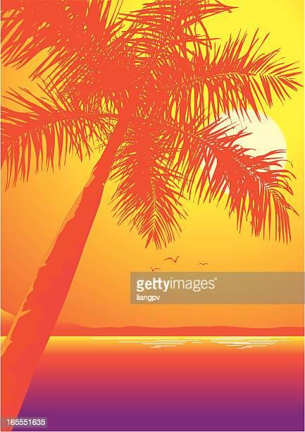 Sun shining over sea and coconut tree
