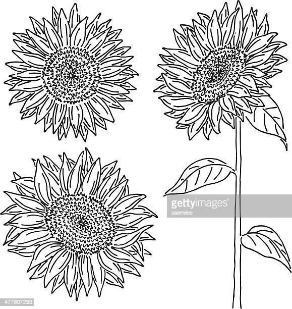sunflower doodle - sunflower stock illustrations, clip art, cartoons, & icons