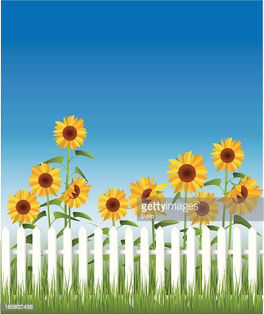 ilustraciones, imágenes clip art, dibujos animados e iconos de stock de girasol valla - girasol