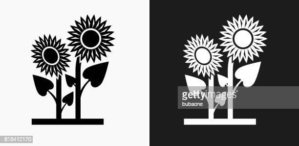 sunflower icon on black and white vector backgrounds - sunflower stock illustrations, clip art, cartoons, & icons