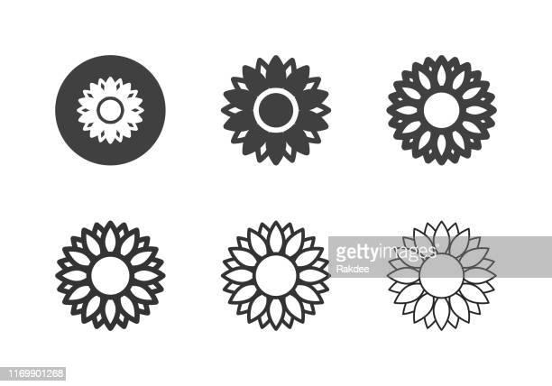 sunflower icons - multi series - sunflower stock illustrations