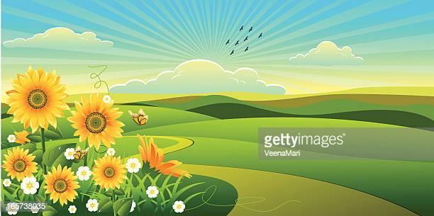 sunflower  landscape... - sunflower stock illustrations, clip art, cartoons, & icons