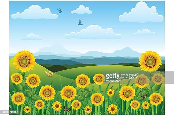 ilustraciones, imágenes clip art, dibujos animados e iconos de stock de girasol paisaje. - girasol
