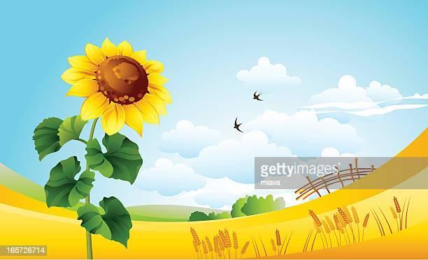 stockillustraties, clipart, cartoons en iconen met sunflower - horizon