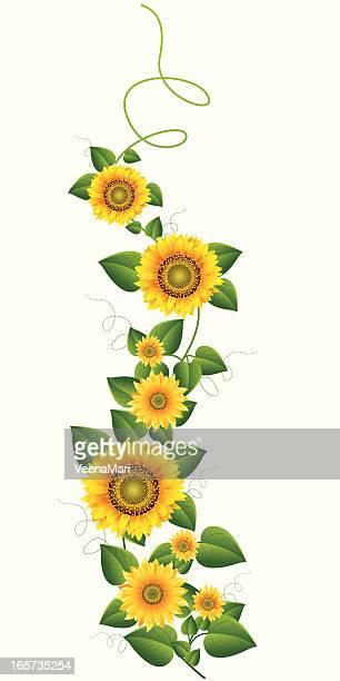sunflower vine.. - sunflower stock illustrations, clip art, cartoons, & icons