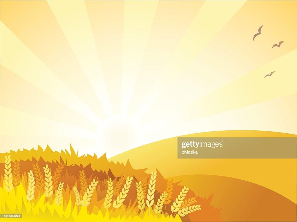 Sunny golden landscape : Stock Illustration