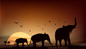 sunrise and sunset over the savannah with three elephants