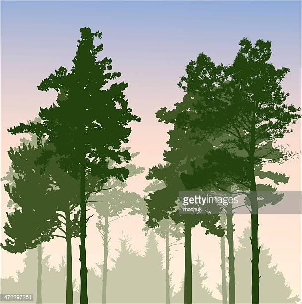 sunrise - tree bark stock illustrations, clip art, cartoons, & icons