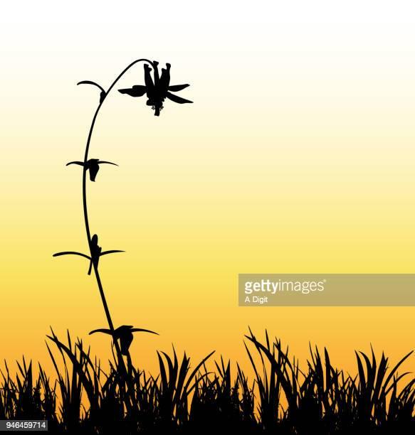 Sonnenuntergang Blume auf der Wiese