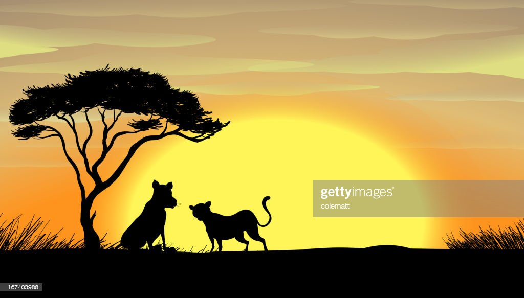 Sunset in africa : Vector Art