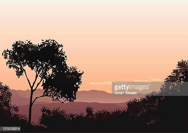sunset over the lost world - bush stock illustrations