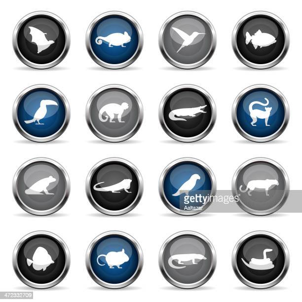 supergloss icons - exotic animals - chameleon stock illustrations, clip art, cartoons, & icons