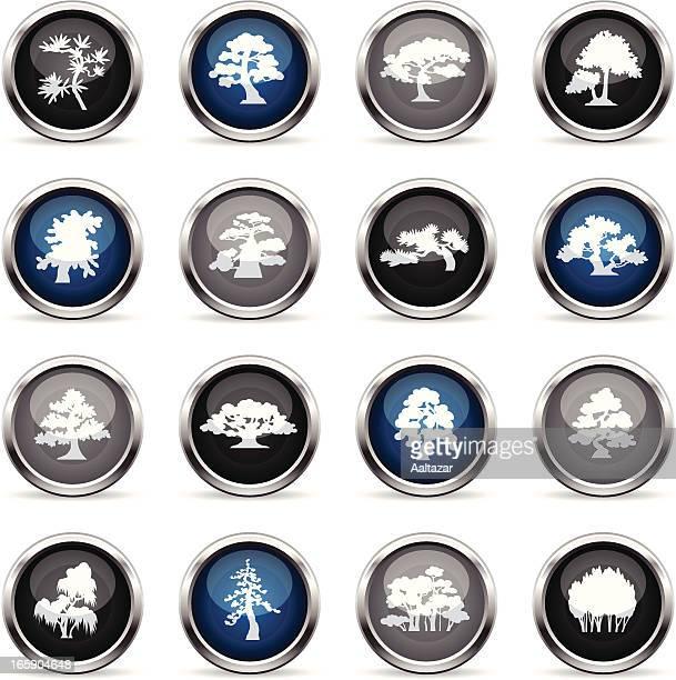supergloss icons - trees species - cedar tree stock illustrations, clip art, cartoons, & icons