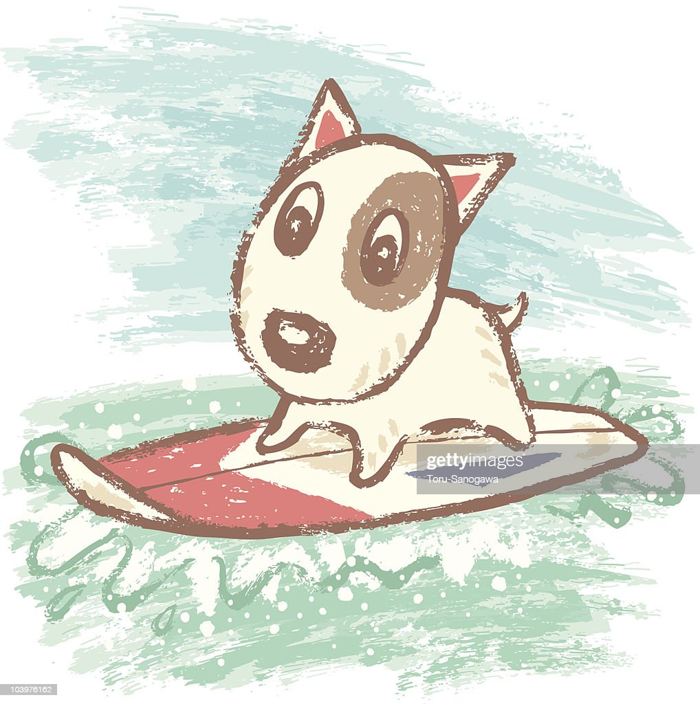 Surfing of bullterrier