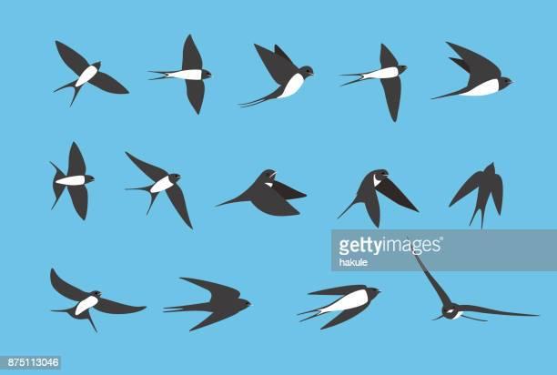 illustrations, cliparts, dessins animés et icônes de hirondelle volant plat icônes ensemble, illustration vectorielle - hirondelle