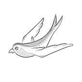 Swallow vector. Coloring book for adults.