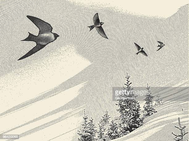 swallows and pine trees - engravement stock illustrations