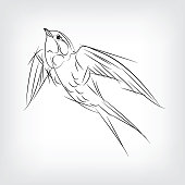 swallows flying bird vintage illustration, engraved retro style, hand drawn, sketch