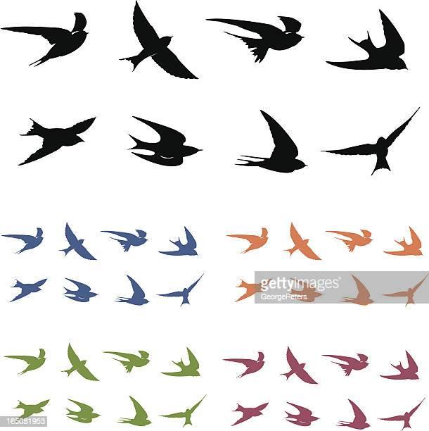 illustrations, cliparts, dessins animés et icônes de hirondelles de vol - hirondelle