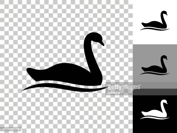 swan icon on checkerboard transparent background - swan stock illustrations