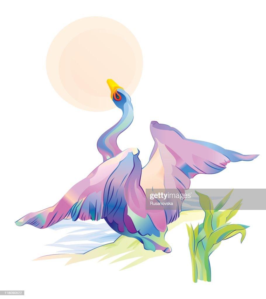 Swan : stock illustration